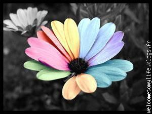 Mon Jardin Secret Blogs Fr Le Blog Multimédia 100 Facile